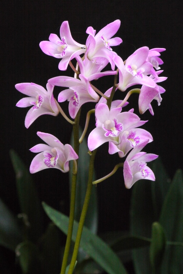 20130911_1148_10351 orchid