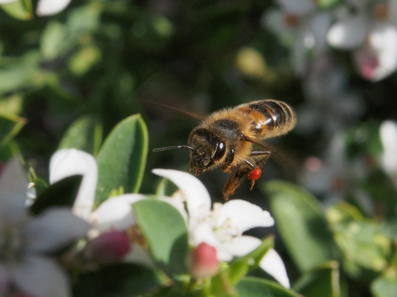20130901_1214_0571 Kew Baptist bee