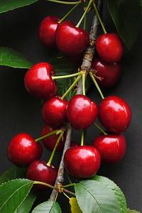 20121202_0834_6239 cherry