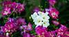 Longwood Gardens - Orchid Extravaganza