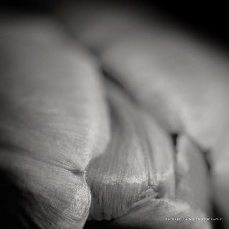 2014-9-20 | Tulip
