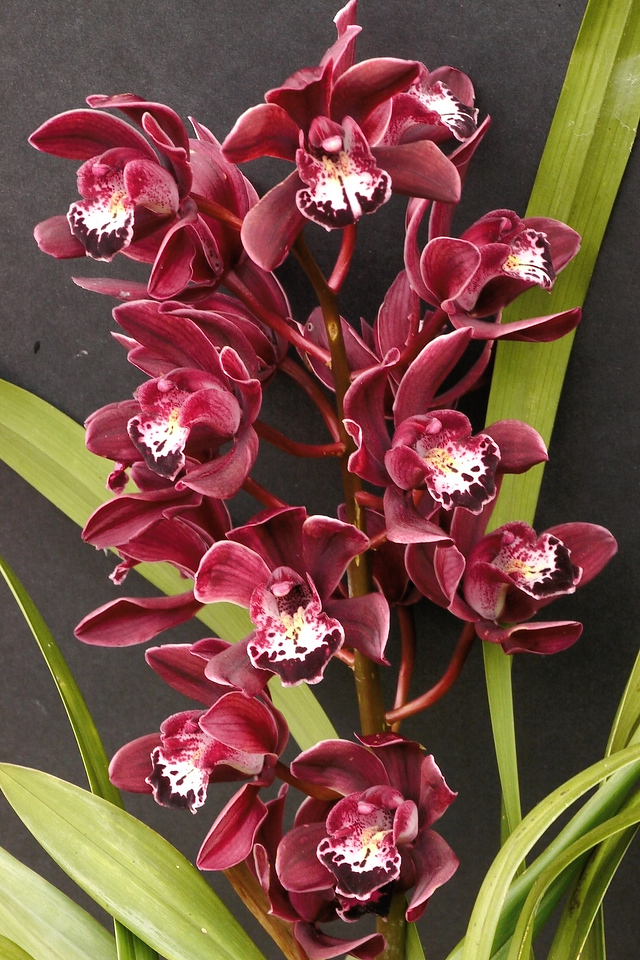 20140724_1226_7248 orchid