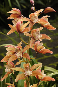 20140621_1002_6841 orchid