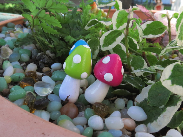 The Faery Garden that Becky made for her Mom<br /> for Mother's Day. The Mushrooms are growing.
