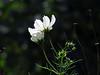 White flowers in the sunlight.