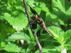 Dragonfly in the Front Garden