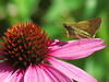 Butterfly and Pink Flower