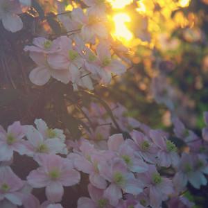 2014 Flowers