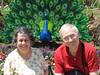 6-27-2015  Peacock made of LEGOS