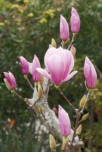 20160805_1511_3570 magnolia