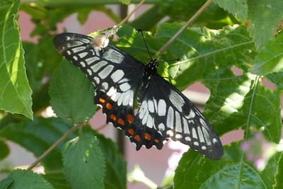 20160316_1114_3002 butterfly