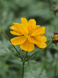 20160111_2345_2051 flower at Kijabe Hospital, Kenya