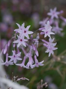 20210208_1720_0395 flower