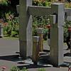Rose - Portland Rose Garden