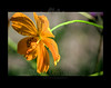 Photo for A Year in Bloom calendar :: November 2012<br /> <br /> 080610_000087 8in x 12in pic 11in x 14in matte