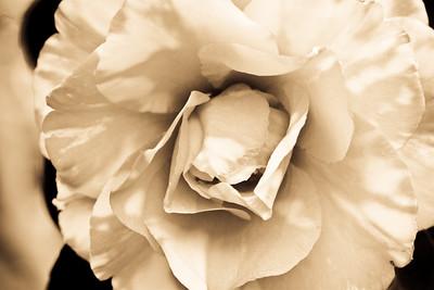 Linen Camellia