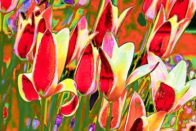 Tulip Riot