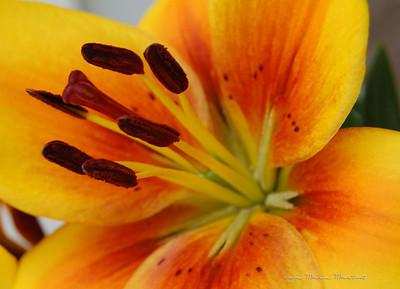 Alaska Flowers photographed by Joyce Marie Martin