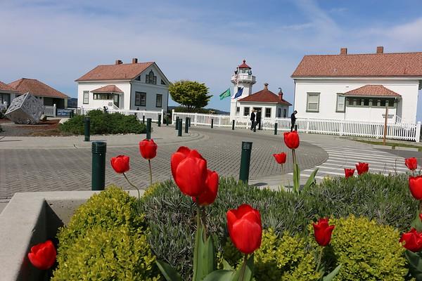 Tulips at the Mukilteo Lighthouse, Mukilteo, WA