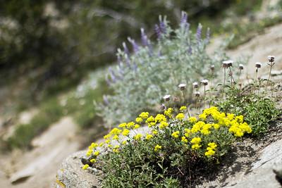 Rocky wildflowers
