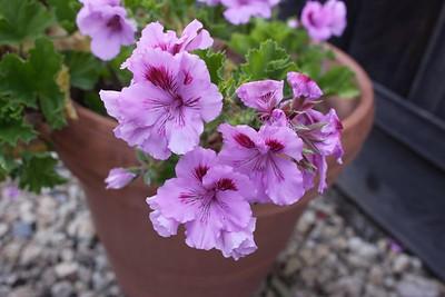Nice Purple
