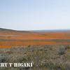 antelope valley-18