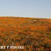 antelope valley-1