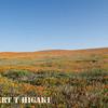antelope valley-6
