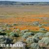 antelope valley-11<br /> <br /> Rabbit Brush foreground