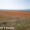antelope valley-16