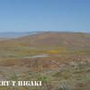 antelope valley-17