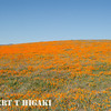 antelope valley-13