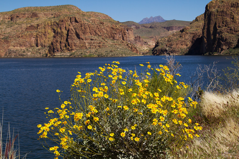 Canyon Lake area, Tonto National Forest, Arizona