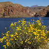Canyon Lake area, Tonto National Forest, Arizona