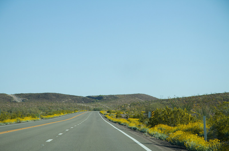 American Highway lined with wildflowers