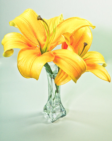 Art's Exotic Oriental Lilly