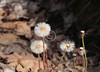 """Dandelions"" near Max Patch, NC<br /> ~ Images by Martin McKenzie ~ All Rights Reserved"