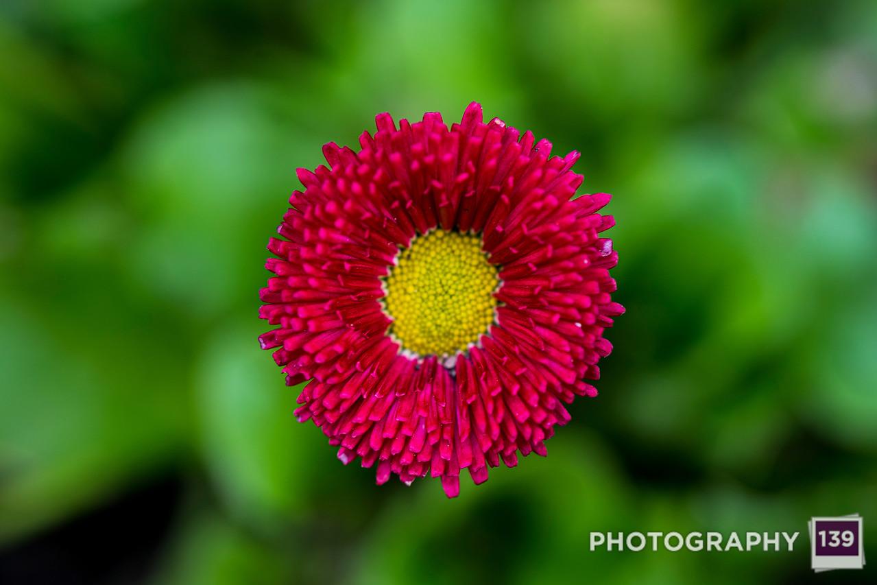 A Garden of Love