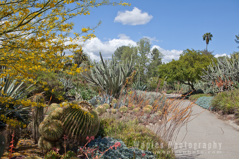 Along the Desert Garden