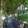 Pergola of Vines