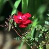 USA, Georgia, GA, Atlanta Botanical Garden, Flower