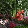 Morrison Garden,  Azalea Collection, National Arboretum, Washington, DC.