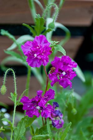 Backyard Wildflowers - 2010