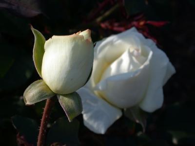 Balboa Park Rose Garden Easter - April 2002