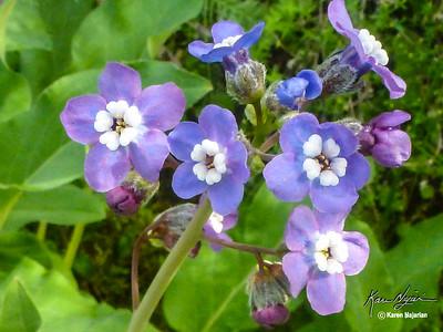 San Francisco Bay Area Wildflowers
