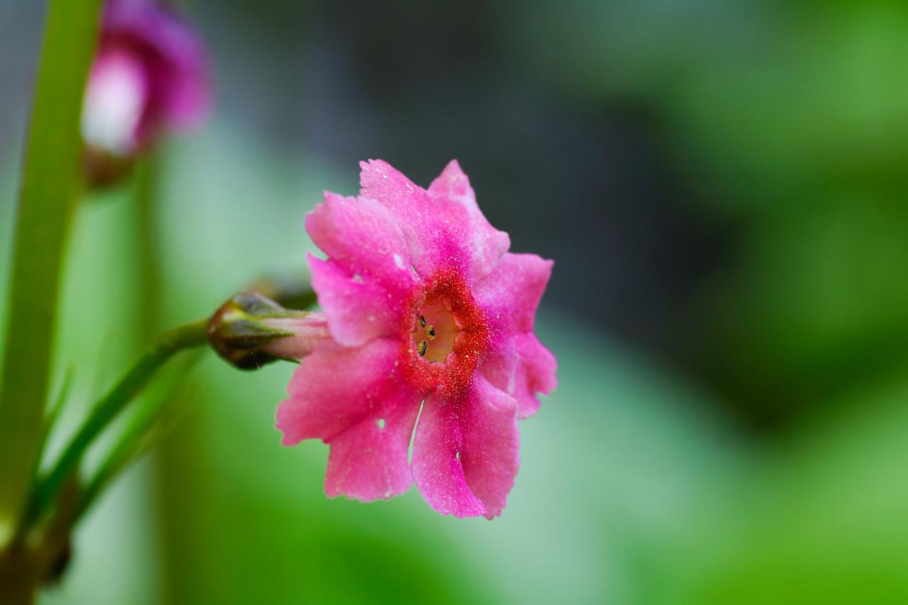 Daintly little pink flower