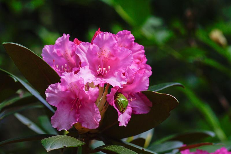 hiding in the petals