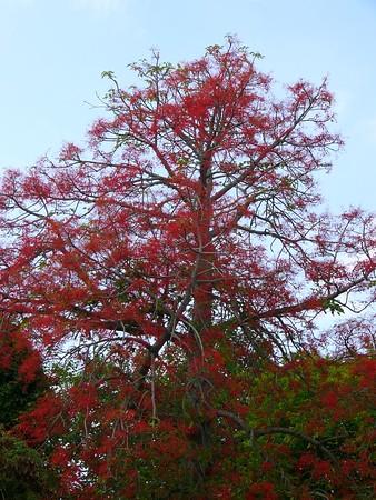 Flowers of Bermuda