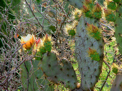 I took lots of photos of cactus in bloom.