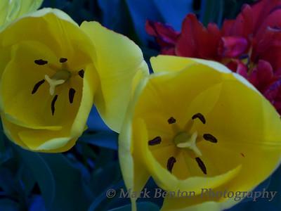Gauguin's Flowers